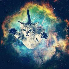 Cat Ruins Video Game Space Rescue