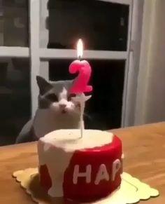 Make a wish - funny animals - Cute cat Cute Funny Animals, Cute Baby Animals, Cute Cats, Cat Plants, Cat Birthday, Happy Birthday, Funny Cat Videos, Humor Videos, Cute Animal Videos