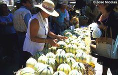 Le melon de Cavaillon - Marché de Provence