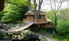 Cliffside Lodge: This thatched tree house in a private garden is valued at £70,000 to £120,000 per unit