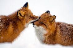 Δέκα υπέροχα ζώα που μπορούν να μας διδάξουν πολλά για την αγάπη και την αφοσίωση σε μια σχέση.