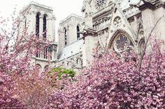 Third Spring - Paris in Four Months
