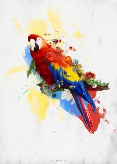 Colourfull Parrot Art by ~TNR38 on deviantART