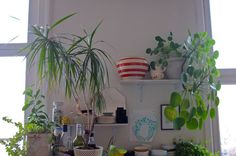 and more plants...