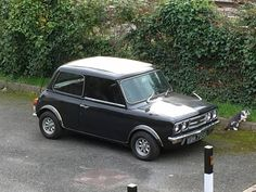 One of the more unusual flavours of a #mini  #1275gt