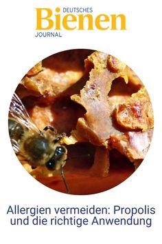 Die Biologin Nadine Kunz am Julius Kühn-Institut in Braunschweig beantwortet fünf Fragen zu dem besonderen Stoff Propolis aus dem Bienenvolk. Denn bei der Anwendung gilt es einiges zu beachten. Unachtsamkeit kann hier sogar zu Allergien führen. #bienen #imkern #propolis #anwendung #biene #anfänger Forever Living Products, Breakfast, Backyard Beekeeping, Allergies, Honey, Diy, Health, Morning Coffee