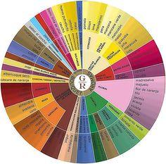 Los sentidos en la cata de vinos La Fase olfativa del vino Rueda de Aromas