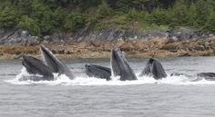 The Best Time for Whale Watching in Maine | eHow