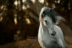 The Ghost From The Past by Hestefotograf on DeviantArt Horse Photos, Horse Pictures, Pictures To Draw, Majestic Horse, Beautiful Horses, Beautiful Life, Equine Photography, Animal Photography, Andalusian Horse