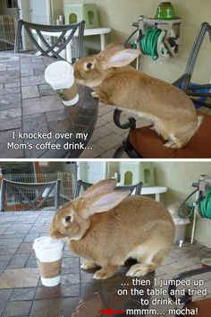 Bunny Shaming...  Haha!  At least the bun didn't waste the coffee!!!!
