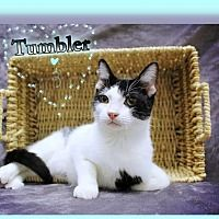 Pet Card Animal Rescue Pets Animals