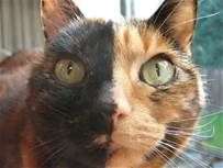 Chimera Cat - Yahoo Image Search Results
