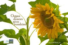 Organ donors give sunshine. http://scottlinscott.zenfolio.com/organdonors