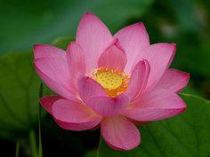 beautiful bloom
