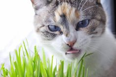 15 Adorable Images of Cats Sticking Out Their Tongues