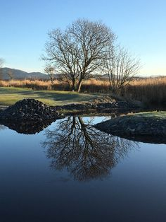 Tree reflection in Rogaland Norway