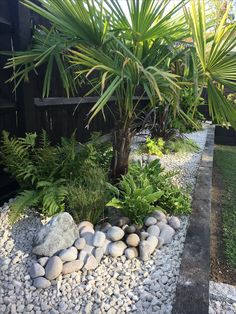 Tropical garden in south east England - Modern Gravel Landscaping, Garden Paving, Tropical Landscaping, Garden Pots, Fairy Doors On Trees, Fairy Garden Doors, Tropical Garden Design, Small Garden Design, Exotic Plants
