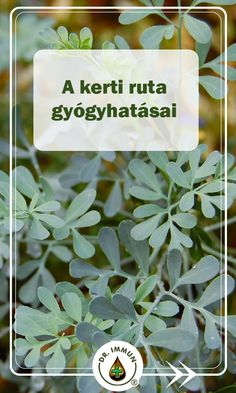Ruta Graveolens, Herb Garden, Health Remedies, Health And Beauty, Place Cards, Place Card Holders, Herbs, Lawn And Garden, Herbs Garden