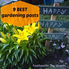 Highest CLIMBer on God's Growing Garden on the JUNE 2015 CLIMB by Feathers in the Woods: http://www.feathersinthewoods.com/2015/05/all-my-best-gardening-tips-and-tricks.html