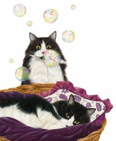 Bubbles  Cats by Anne Mortimer