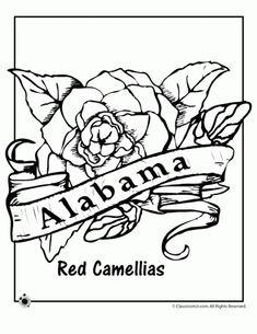 Alabama state bird Yellowhammer state flower Camillia