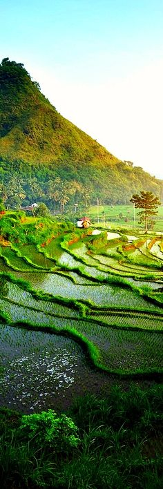 8. Rice terrace in mountains, Bali, Indonesia In agriculture, a terrace is a piece of sloped plane that has been cut into a series of successively receding flat surfaces or platforms, which resemble steps, for the purposes of effective farming . This type of landscaping, therefore, is called terracing. Graduated terrace steps are commonly used …