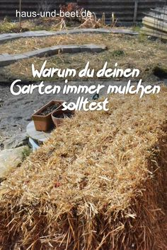 Why you should always mulch your garden. Mulch vegetable patch with different materials. Vegetable plants are protected, watering less, pests leave the vegetable garden alone and useful insects overwi