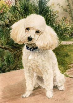Poodle Mini Print Poodle Mini Canvas Print ACEO Dog by PTarlowArt Purchase this little charming print for $5.50 and up