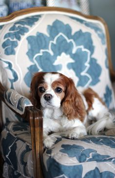 Love this gorgeous blue and white pattern... ok, and the Cavalier King Charles Spaniel!