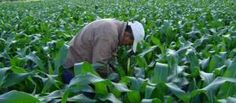 Con 12 proyectos, el agro será la clave en el Congreso Plants, Projects, Flora, Plant