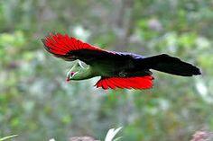 Knysna Loerie by Knysna Log Inn Knysna, South African Birds, Outdoor Family Photography, Bird Free, Most Beautiful Birds, Free Desktop Wallpaper, Bird Pictures, African Animals, Exotic Birds