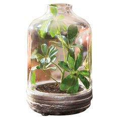 Bring a touch of nature to your three-season porch or dining table centerpiece with this rustic terrarium, featuring a weathered wood base and glass cloche.