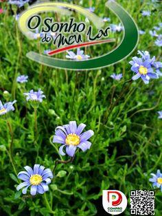 FELICIA AMELLOIDES  Arbusto medianamente vigoroso.Resistente ao frio e tolerante à exposição directa ao sol, necessita regas moderadas. Tufo com floração abundante azul. Frequentemente utilizado em canteiros e floreiras.