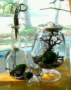 petit jardin d'eau marimo terrarium driftwood tillandsia air plant centerpiece arrangement