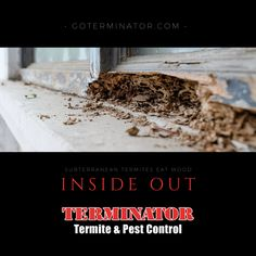 Signs of a Termite Infestation - Terminator Termite & Pest Control Signs Of Termites, Termite Pest Control, Inside Out, How To Dry Basil, Money, Eat, Wood, Woodwind Instrument, Trees