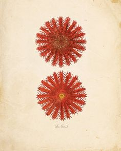 Items similar to Vintage Sea Coral on Antique Ephemera Print 8x10 P104 on Etsy
