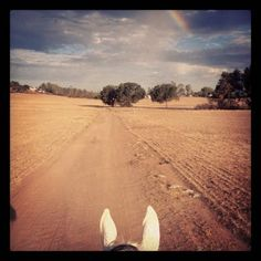 Create an end of life plan for your horse!   http://www.proequinegrooms.com/index.php/tips/grooming/your-horse-s-passing-create-an-end-of-life-plan/