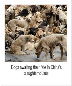 china fur trade - What I wouldn't do to save each and every one.