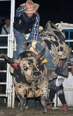 bull riding, going off the top but hanging on to his hat at all times. Rodeo Cowboys, Real Cowboys, Cowboys And Indians, Wild Bull, Bucking Bulls, Rodeo Events, Rodeo Time, Independance Day, Taurus