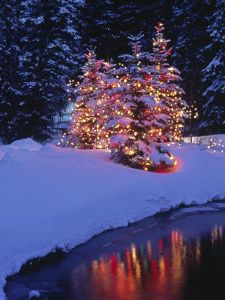 Always wanted to put lights on trees by my pond or a tree on the ice with lights! Note to self to do this this year!