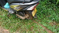 Flat tire happened on my way to Meemure in the middle of a jungle. Wild Elephant, Local Hospitals, Shop Up, Flat Tire, New Tyres, Sri Lanka, Middle, Flats, Loafers & Slip Ons