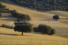 Fields, trees, landscape