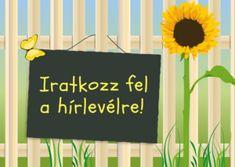 Illatos balkonnövények kezdőknek is Zinnias, Petunias, Lavandula, Clay Ornaments, Bougainvillea, Aktiv, Ficus, Holiday Crafts, Diy And Crafts