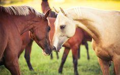 naturaleza, caballo, pareja, animales, Caballos, hierba