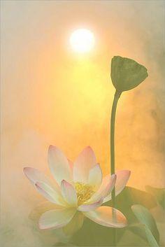 Als je je kunt ontspannen, midden in verwarring, dan zul je helderheid vinden.   Als je je kunt ontspannen, midden in onzekerheid, dan zul je zekerheid vinden.   Als je je kunt ontspannen, midden in kwetsbaarheid, dan zul je je kracht vinden.   Als je je kunt ontspannen, midden in onrust, dan zul je vrede vinden.   Erik van Zuydam