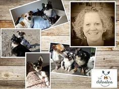 Wie zijn wij....  Ik, Corinne Hendriksen, ben het gezicht achter Casa Chihuahua. Casa Chihuahua is ontstaan vanuit de passie en liefde voor chihuahua's.  Onze eerste liefde was echter een Jack Russell, maar al snel kwam daar een chihuahua bij. Inmiddels bestaat onze roedel uit 3 chihuahua's (Diesel, Spike en Binky) en natuurlijk onze Jack Russell (Sara).  Wij nodigen u van harte uit om op de webshop rond te neuzen en hopen u te kunnen verrassen met leuke artikelen.