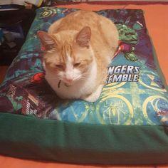 Felix feliz en su colchoneta #advangers #gatosbogota #gato