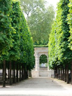 Fascinating Evergreen Pleached Trees for Outdoor Landscaping 41 Landscape Architecture, Landscape Design, Garden Design, House Landscape, Outdoor Landscaping, Front Yard Landscaping, Landscaping Ideas, Permaculture, Front Yard Flowers