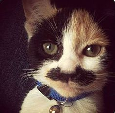 What a good-looking cat with a mustache!
