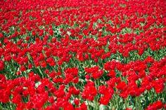 gyönyörű vörös nem csúnya a Hanneke Luit